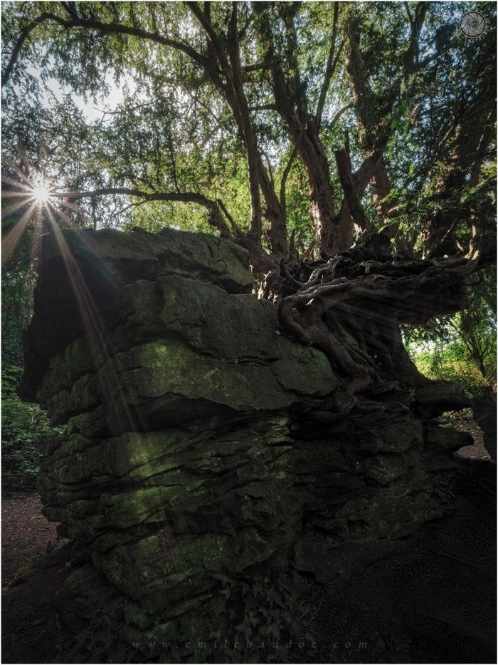 Tree And Stone 10-4